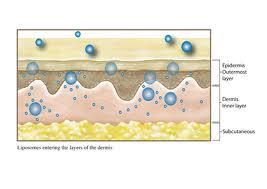 Liposomes